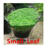 Aquarium Plant Seed Glossostigma Hemianthus Callitrichoides Easy Growing Aquarium Water Plant Grass Seed Fish Tank Lawn Decor