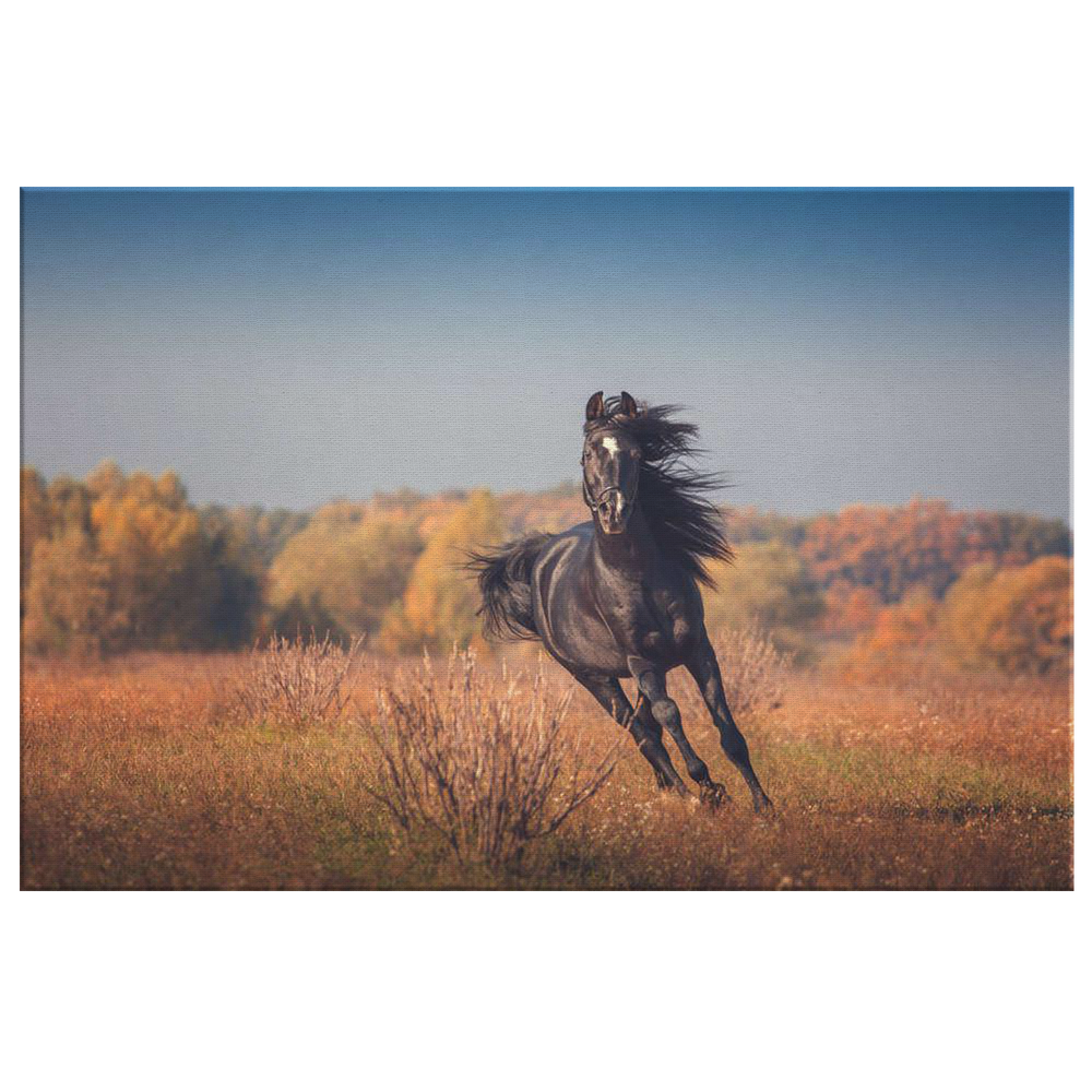 Black Arabian Horse Canvas
