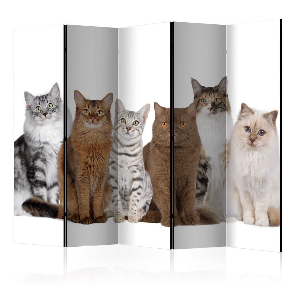 Paravento - Sweet Cats II [Room Dividers]