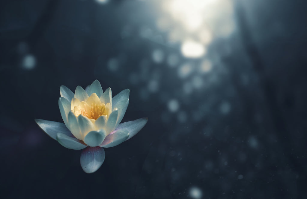 Flower blossoming in the light - Karma Series: The Law of Growth - ILYNSI Yoga