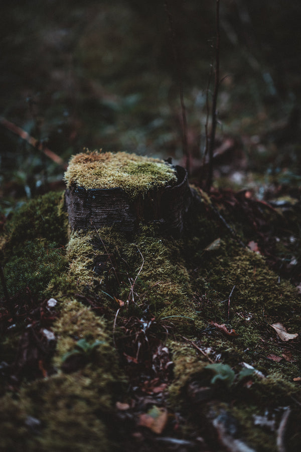 Earthy Mossy Picture Representing CBD Closeness to Nature