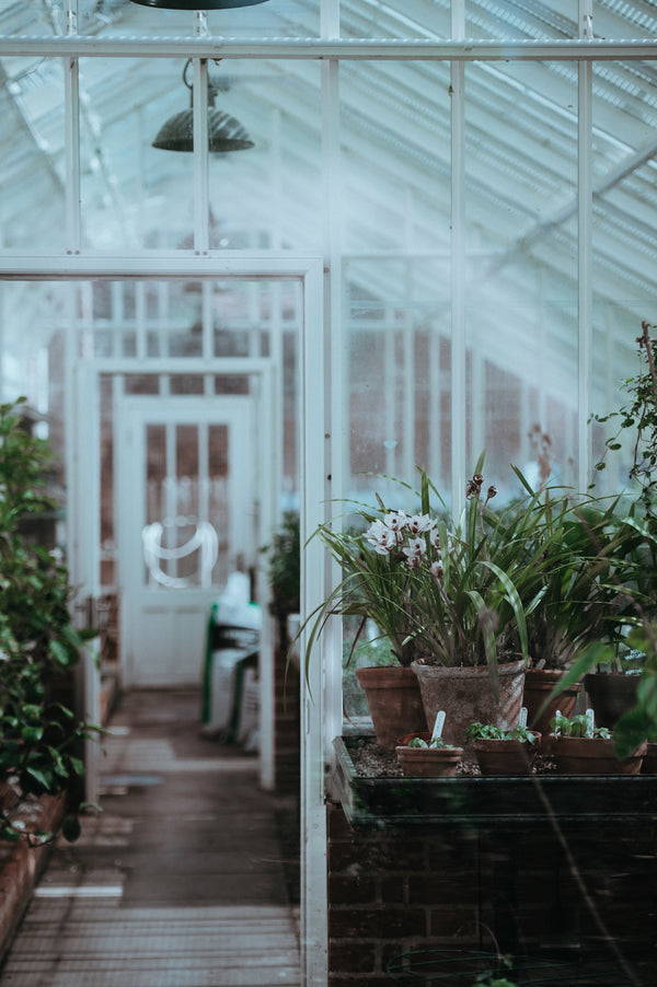 An inviting, triangular greenhouse with ceramic pots of lush green plants