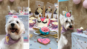 Unicorn Theme Dog Party and Dog Cake
