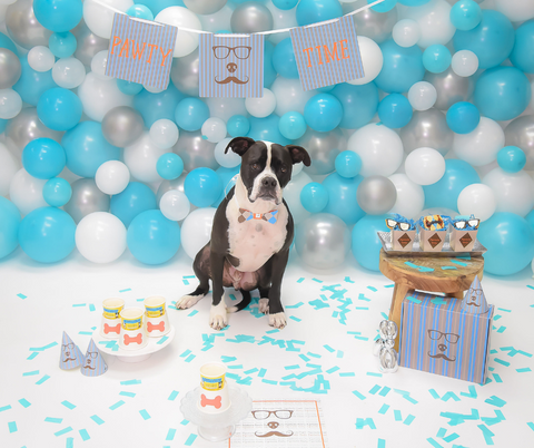 Gotcha Day Party Decoration