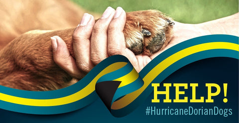 Hurricane Dorian Dog Rescue