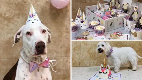 Unicorn Dog Party Supplies