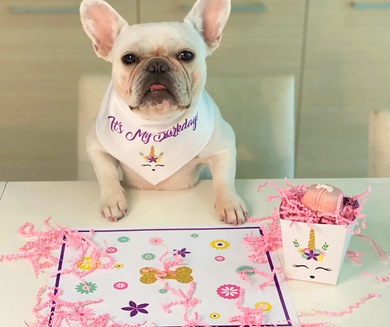 Unicorn Theme Barkday and Gotcha Day Bandana