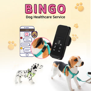 [JMsmart]  Animals Body care/ Smart band/ Dog healthcare service