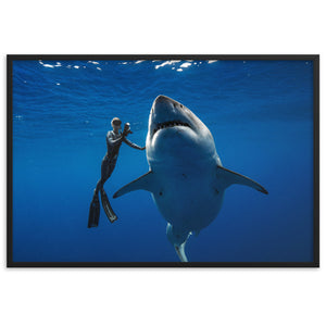 Coexist. Iconic historical photo by @JuanSharks of Ocean Ramsey with the largest Great White shark in the world.  Framed matte paper poster
