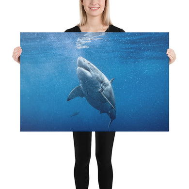 Great White Goals Holiday Canvas
