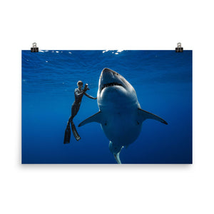 Help Save Sharks Great White Shark Hawaii Deep Blue and Ocean Ramsey Photo paper poster