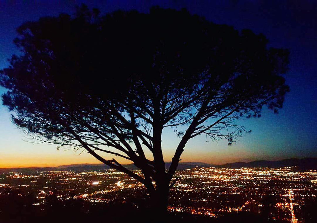 Wisdom Tree/ Cahuenga Peak