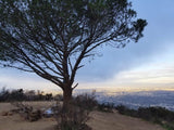 Hollywood Sign Via Wisdom Tree Hike (Intermediate to Strenuous)