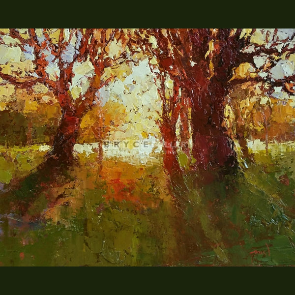 Gold Sunset Hagley Park Paintings