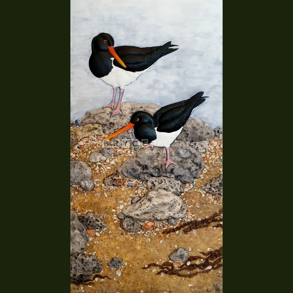 Oyster Catchers Paintings