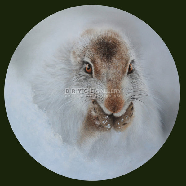 Winter Preening (Snowy Scottish Mountain Hare) Pastel