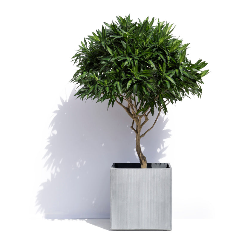 Geneva Planter - Striped