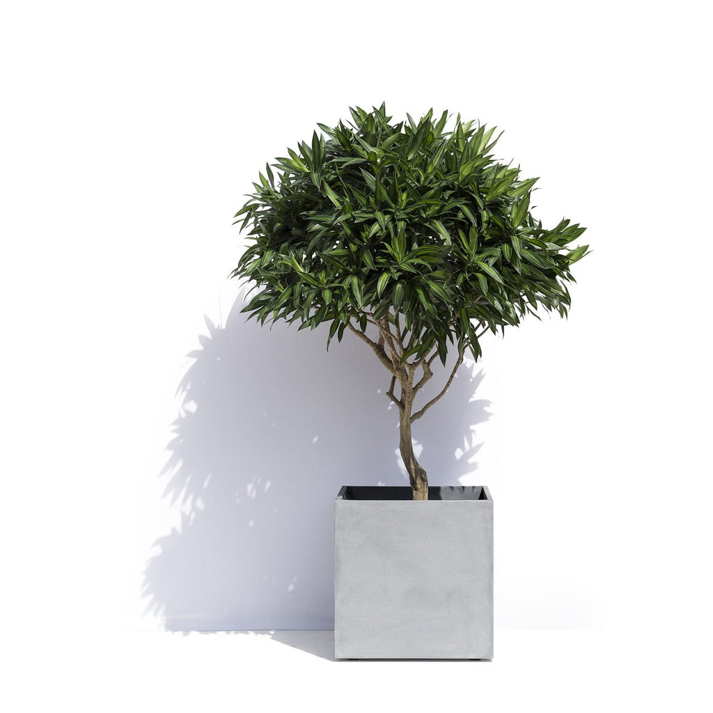 Geneva Square Planter Pot by Cosapots