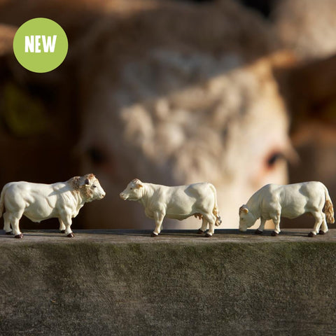 Britains Charolais Cattle Set