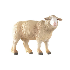 A White Merino Sheep from t...