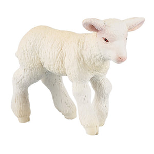 A white-coated lamb from th...