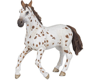 A magnificent Appaloosa Mar...