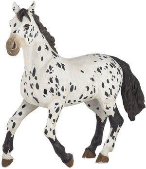 A beautiful black Appaloosa...