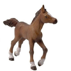 An Anglo-Arab foal from the...