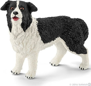 Border Collies are passiona...