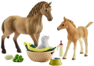 A Quarter horse foal has be...