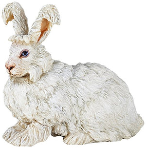 An Angora Rabbit from the P...