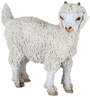 A Young Angora Goat from th...