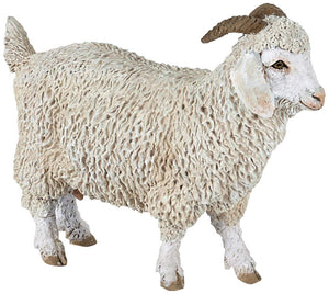 An Angora Goat from the Pap...