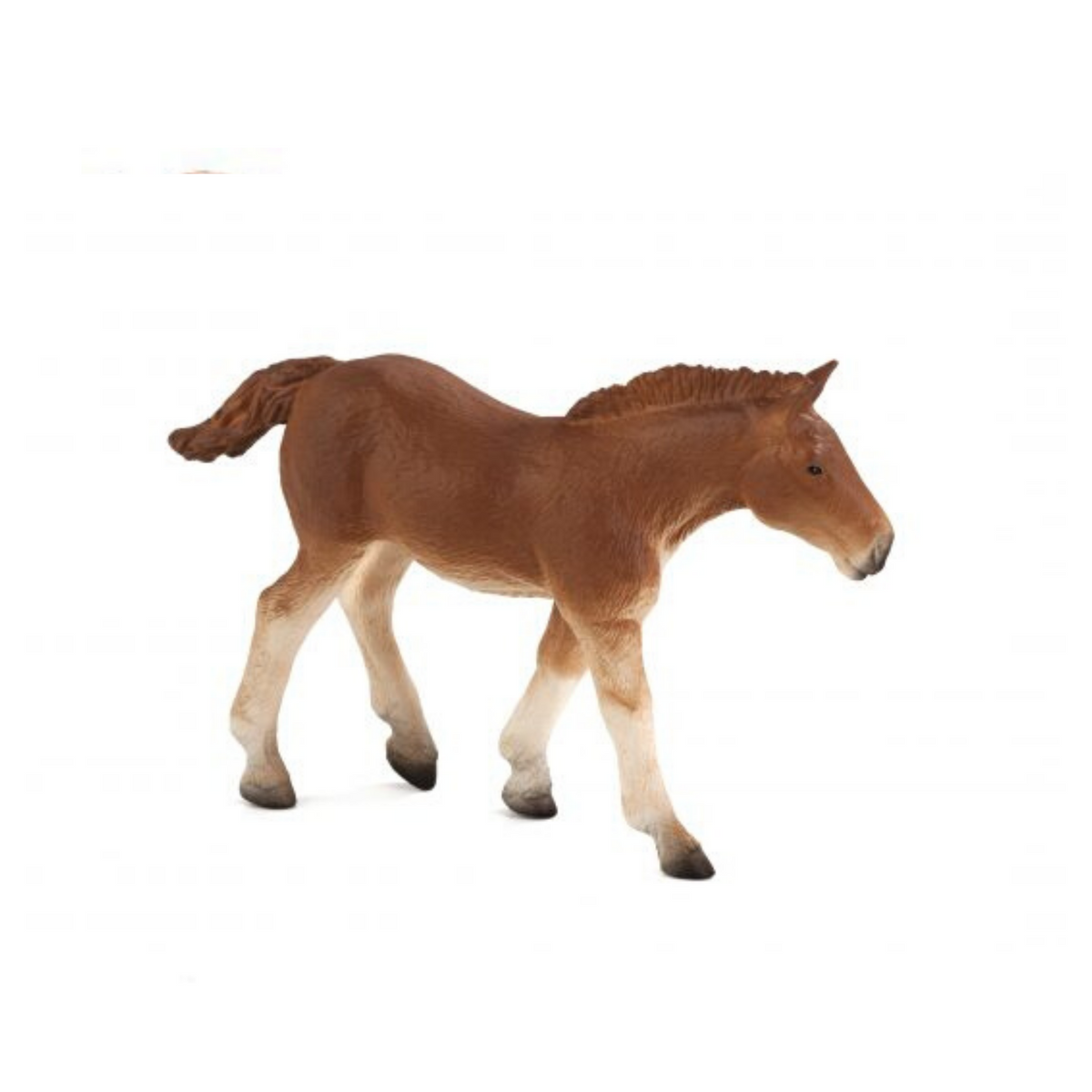 Suffolk Punch Foal Animal Planet 387196