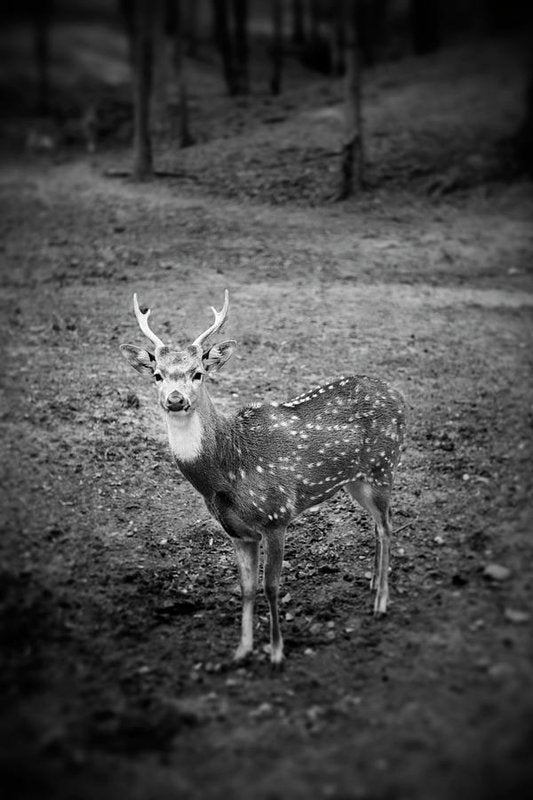 Deer Photo By Blayne Macauley - Art Print