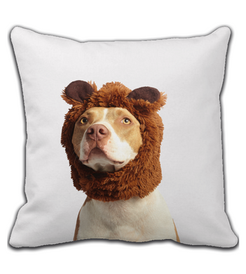 Throw Pillow Dog or bear?