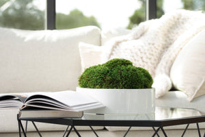 White High Gloss Moss Pot Round