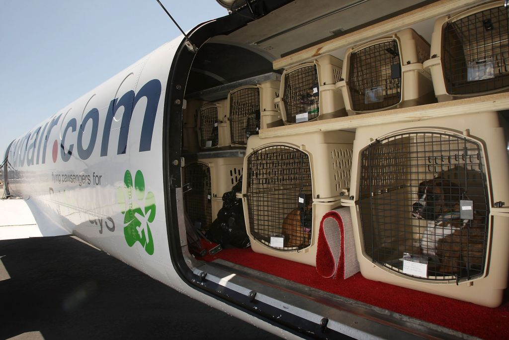 Air Travel: Why Are Dogs Dying On Airplanes?