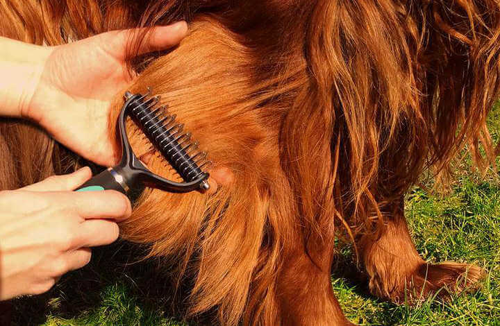 Dematting Tool in Action: Brushing Your Dog the Effective and Painless Way