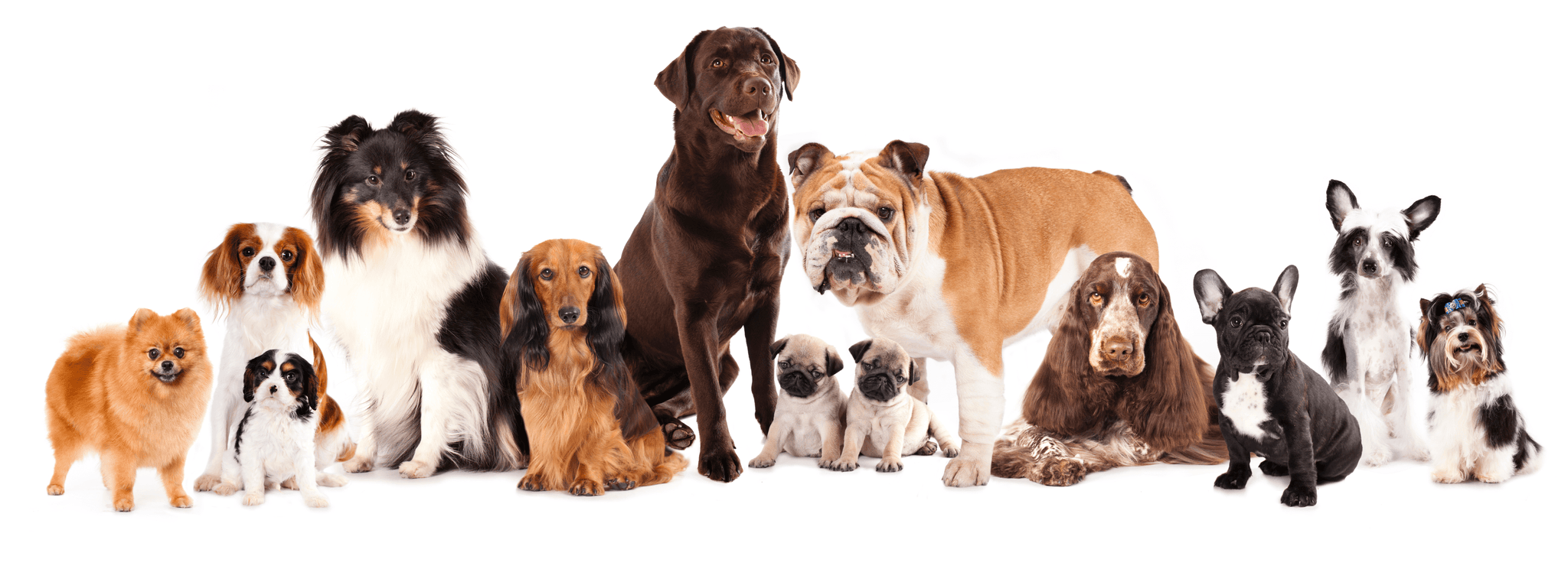 Learn How Genteel Can Help You and Your Furry Friends!