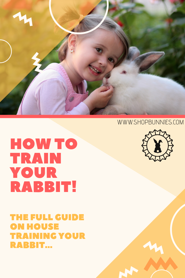 house rabbit training guide how to train litter your bunny
