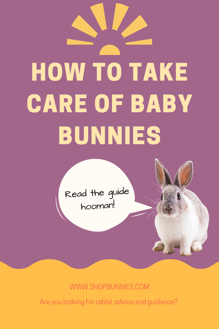How to Take Care of Baby Bunnies