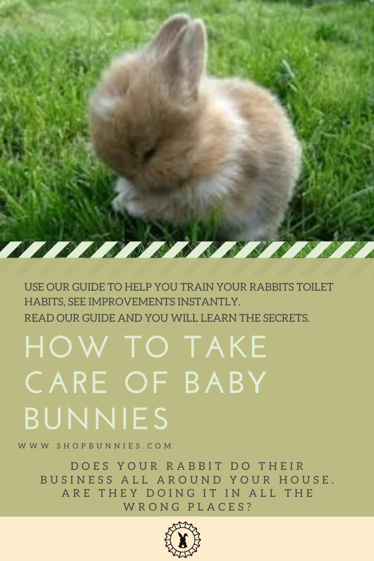 baby bunny guide