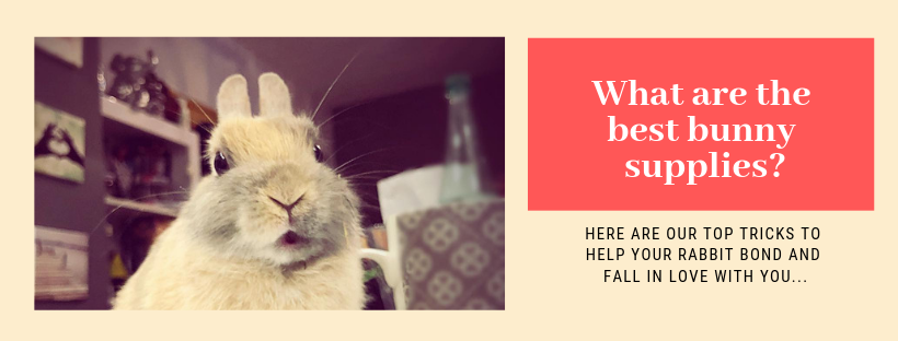10 helpful ideas that every new rabbit owner should know.