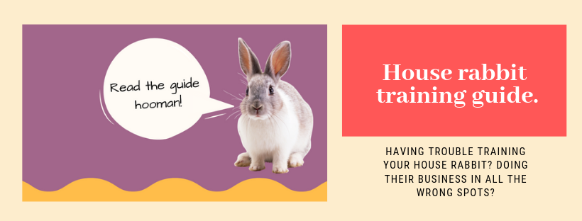 house rabbit training litter guide