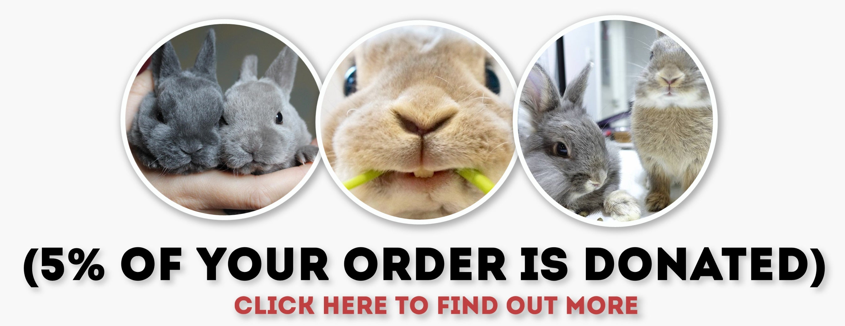 rabbit shop online store charity
