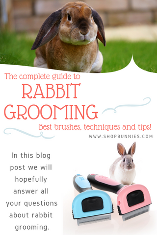 grooming your rabbit a full guide
