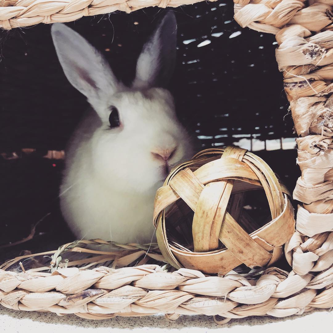 Rabbit toy DIY ideas.Pet House website , Easy to make, cardboard Ideas for Indoor and Outdoor bordem buster Accessories made from Wood.