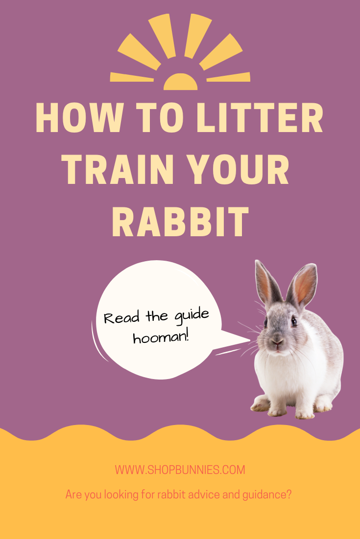 house training rabbit litter train your bunny