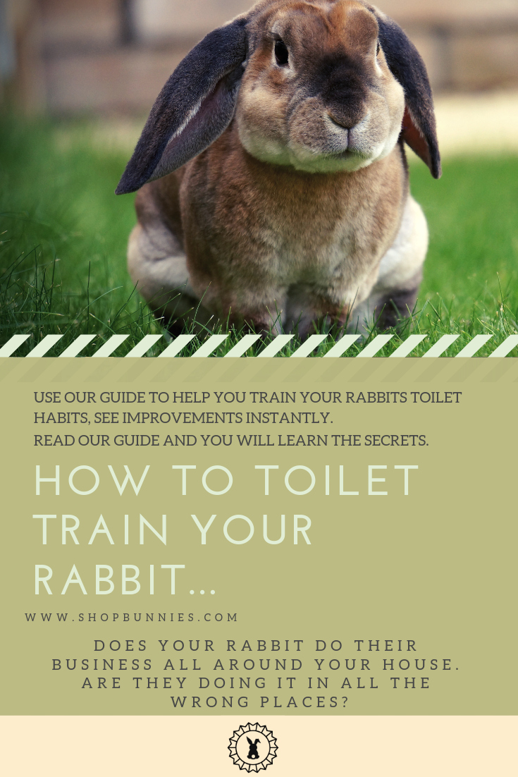 house litter training your rabbit guide